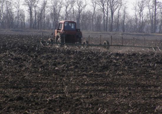 Мільйон га полів засіяли зерновими
