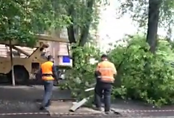 Кабмін та Генпрокурора просять звернути увагу на винищення дерев у Дніпрі