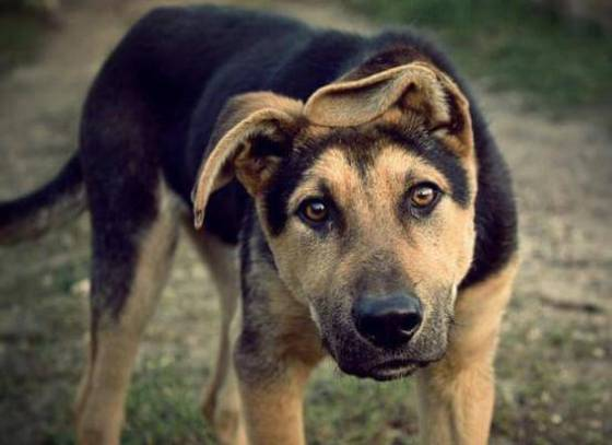 Будівництво дніпровської клініки стеріалізації собак за рік подорожчало на 66%
