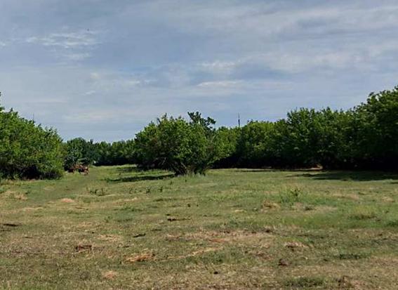 На Дніпропетровщині приватизували посадку з деревами
