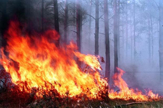 На Днепропетровщине повышенная пожарная опасность