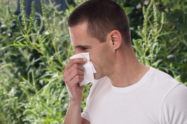 В Днепре «Горзеленстрой» борется с вредным воздействием амброзии