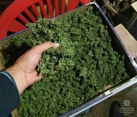 Криворожец выращивал наркотические растения для собственного потребления