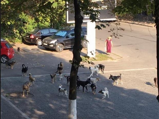 Бродячие собаки-террористы запугали жителей центра Днепра