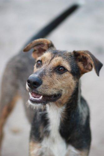 Молодой, обаятельный, активный и по-щенячьи задорный пес Рэкс ждет своего хозяина!