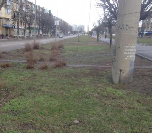 Жители Днепра разыскивают «призрачные деревья» из списка высаженных «Горзеленстроем»