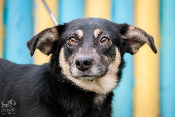 Чудесная и нежная собака-компоньон Лола подарит радость вашему дому