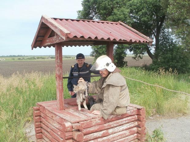 На Днепропетровщине спасатели вытащили из колодца несчастного, но живого кота