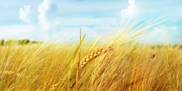 Украина экспортировала более 15 млн тонн кукурузы, ячменя и пшеницы