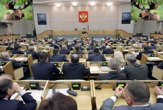 Госдума России озабочена животными у «стены Коломойского»