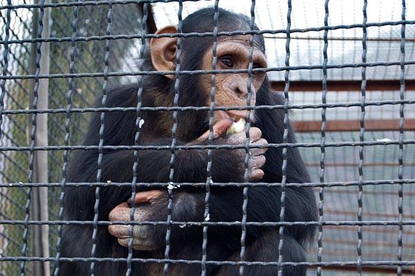 Зоозону в парке Шевченко окончательно решили ликвидировать, животных – раздать