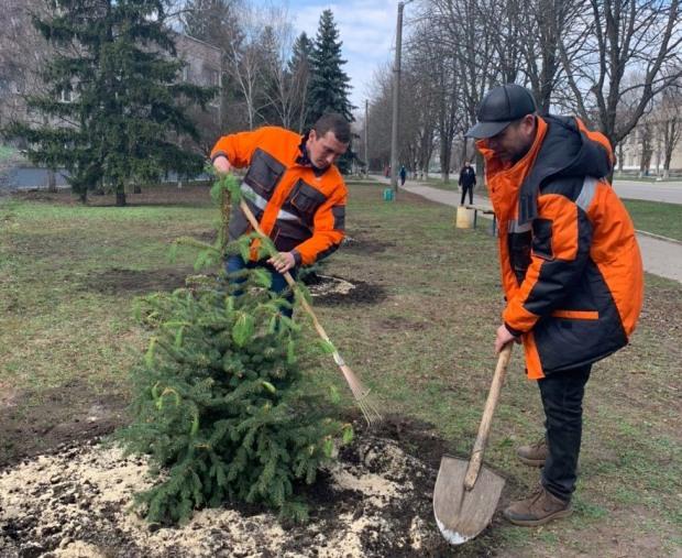 Газовики высадили елки в Магдалиновке