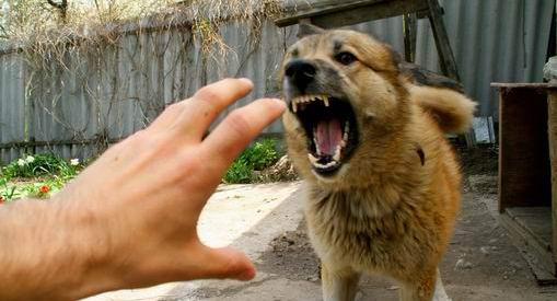 Житель Кривого Рога спустил на военкомов собаку