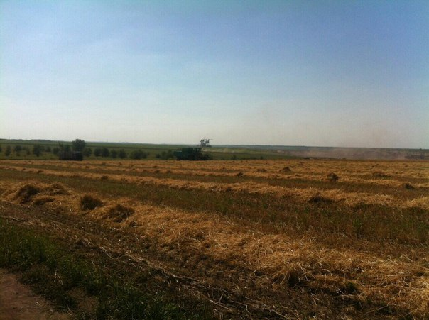 Прокуратура изъяла урожай фермеров-«самозванцев»