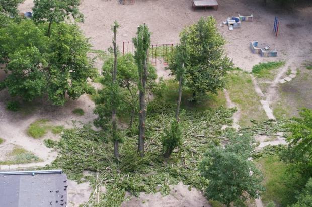 Как бороться с незаконным уничтожением деревьев в городе
