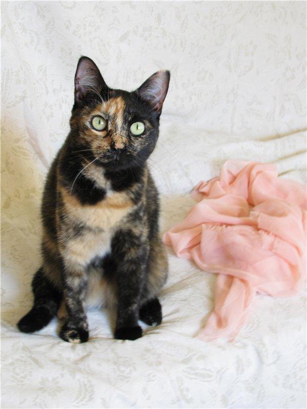 Каждой кошке нужен дом: малышка Софи ждёт хозяина.