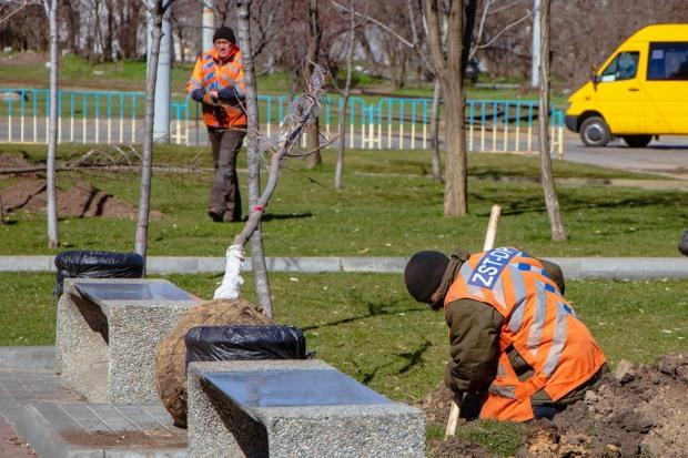 В Дніпрі висадять 3.264 дерева