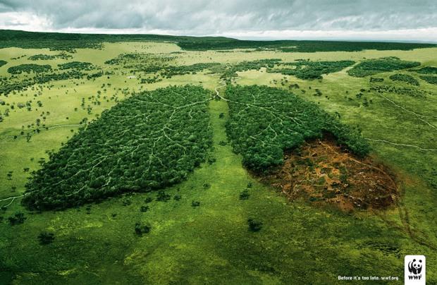 Леса Днепропетровщины могут передать территориальным громадам