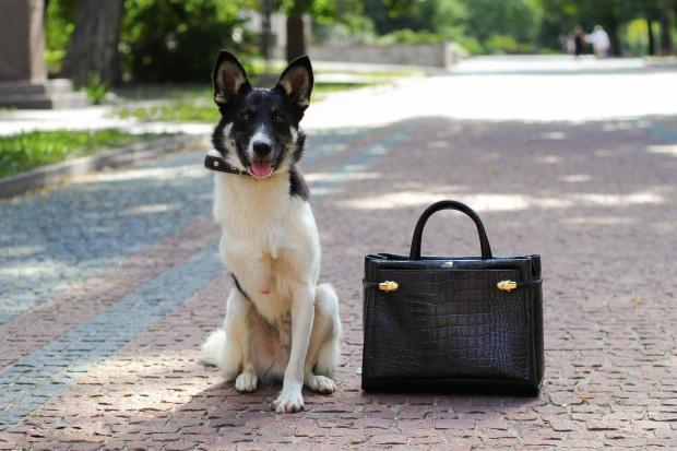 Волонтеры и бизнесмены объединили бездомных собак с брендовыми сумками