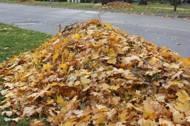 Сжигание листьев вредит вашему здоровью и окружающей среде