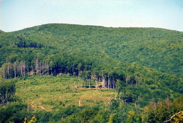 Сайт областного управления лесного и охотничьего хозяйства Днепропетровщины попал в антирейтинг