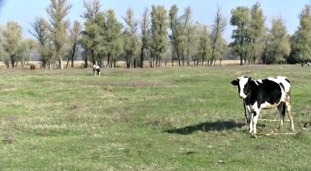 В Днепропетровской области появится «евромолоко»
