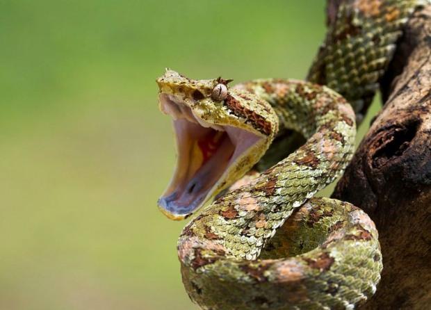 В центре Днепра обнаружили полутораметровую змею