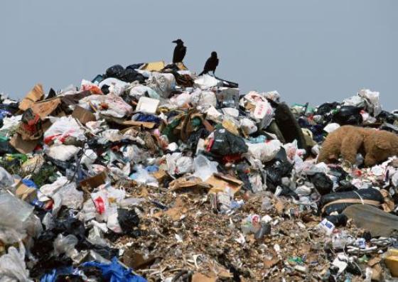 Полиция проверит, как Голосной кидает мусор по посадкам