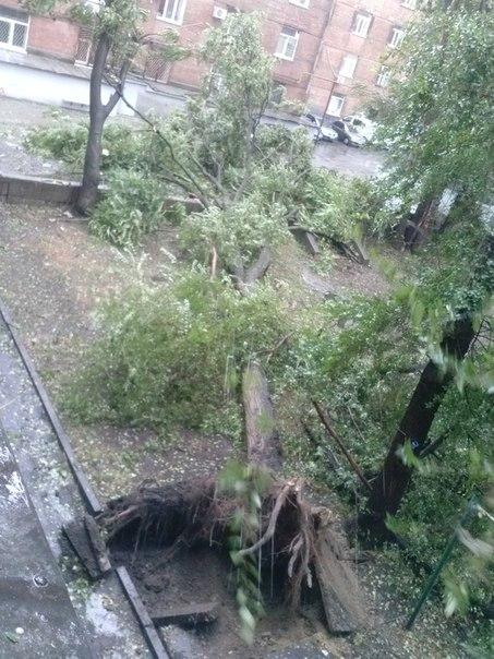Подсчитаны жертвы и упавшие деревья от урагана на Днепропетровщине