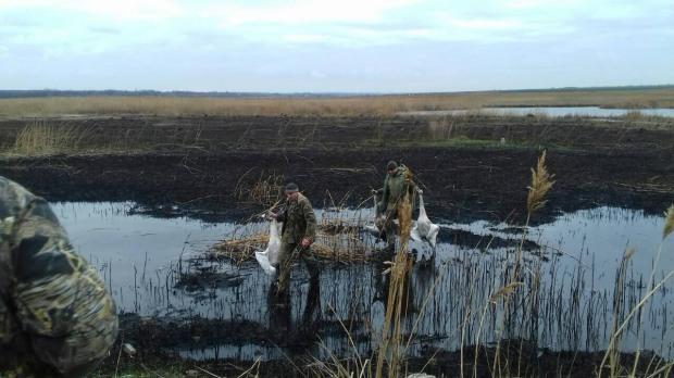 На Днепропетровщине двое «защитников природы» расстреляли лебедей