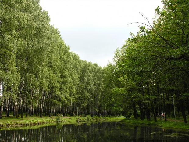21 березня на Дніпропетровщині висадять тисячі дерев