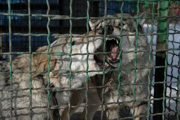 Зоопарк на Монастырском острове в Днепропетровске закрывают