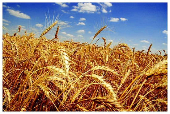 Прогнозы на зиму оптимистичные, – главный аграрник Днепропетровской ОГА