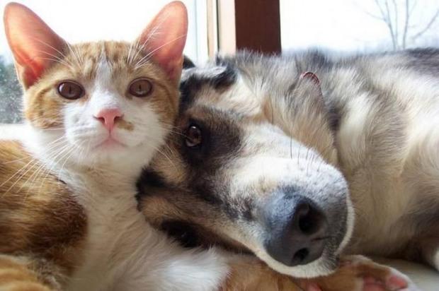В Днепре вводят правила содержания домашних животных, за нарушение – штраф