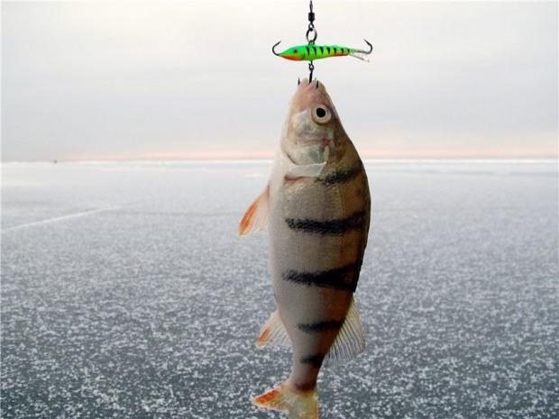 На Днепропетровщине грядет трехмесячный запрет на рыбалку
