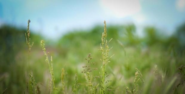Как аллергикам «обезопаситься» от сезонных приступов