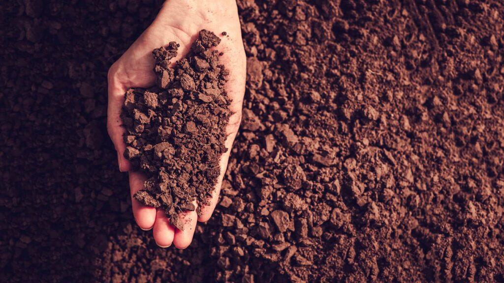 На Дніпропетровщині судять колишню голову сільради за махінації з землею