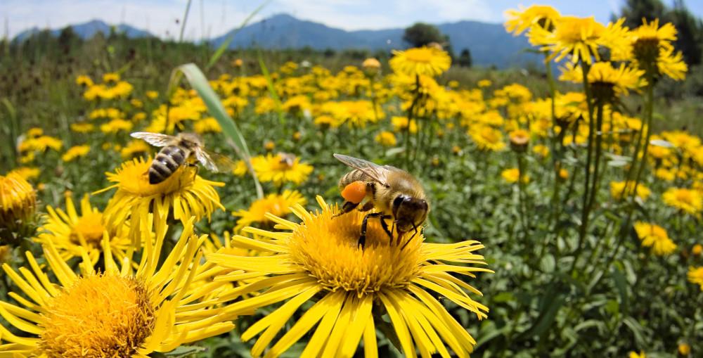 Держава пропонує фінансову допомогу власникам бджолосімей