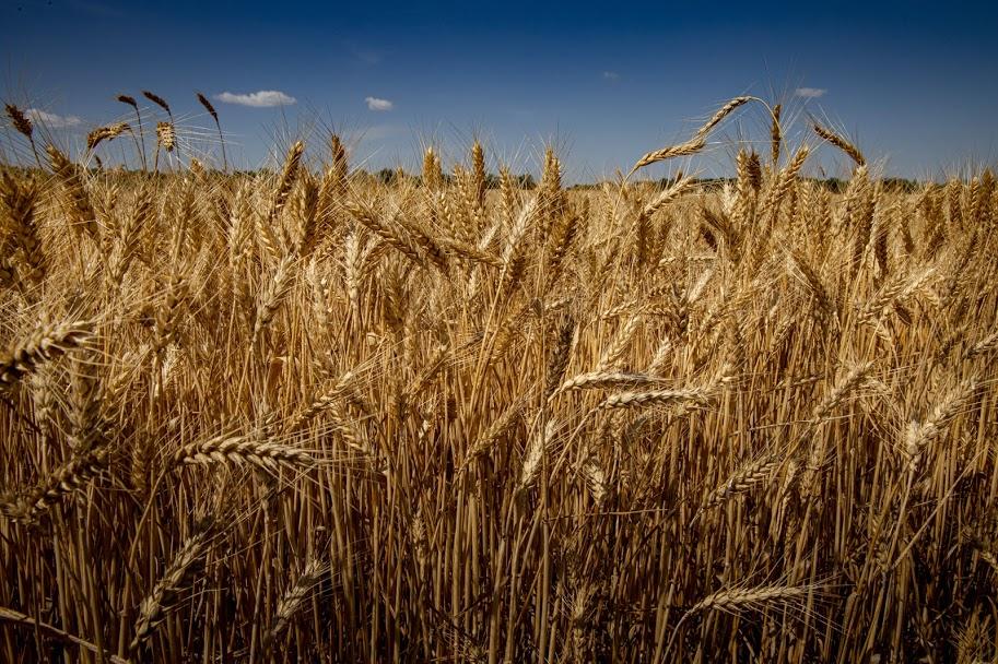 У пілотному проєкті зі створення аграрного реєстру працюють три громади Дніпропетровщини