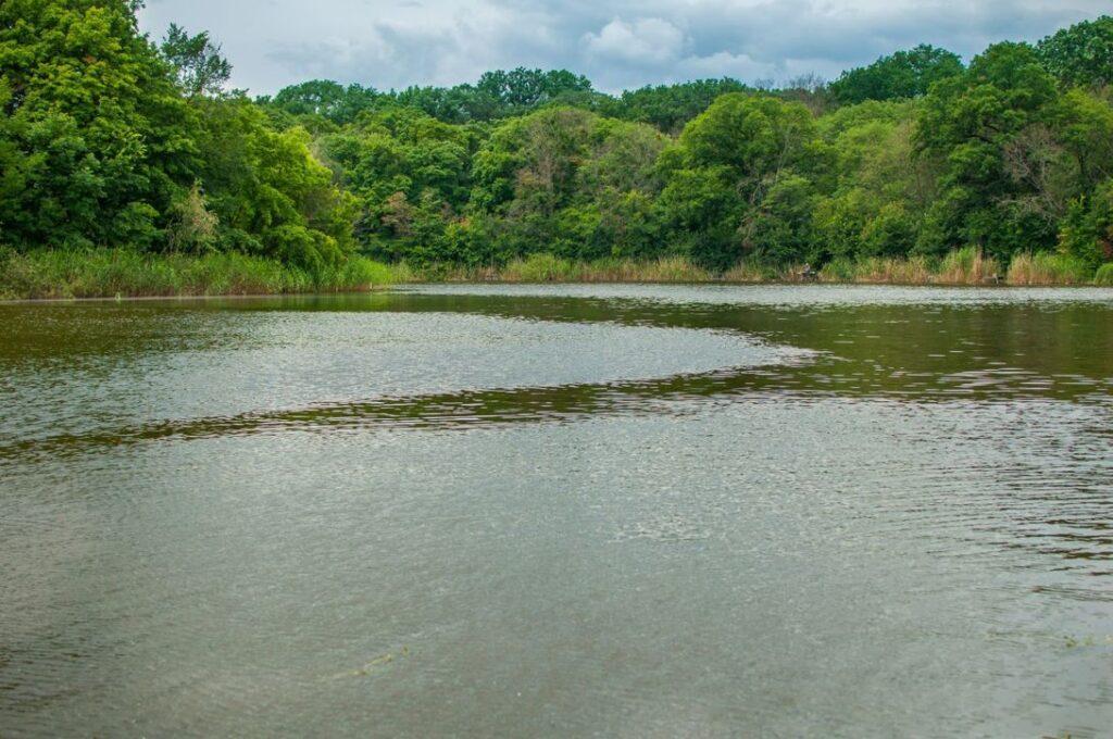 Дамби та греблі вбивають річки Дніпропетровщини (фото, відео)