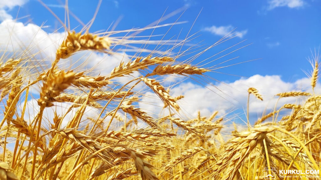 Через зрив форвардних контрактів по зерну українські аграрії будуть втрачати більше $ 400 млн в рік – експерти (відео)