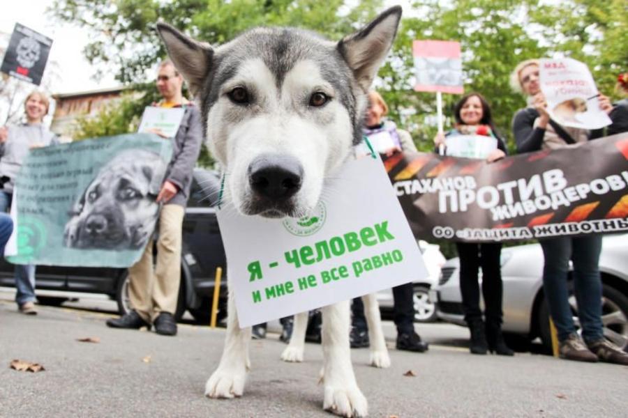 У Дніпрі масово вбивають собак: хто і чим труїть та як рятувати