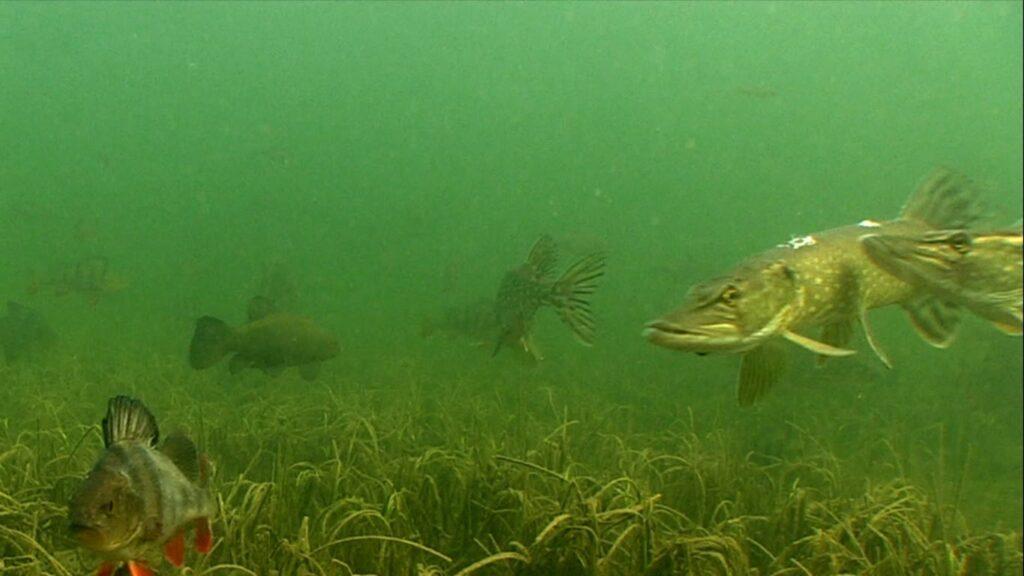 Браконьєри ловлять рибу навіть під водою