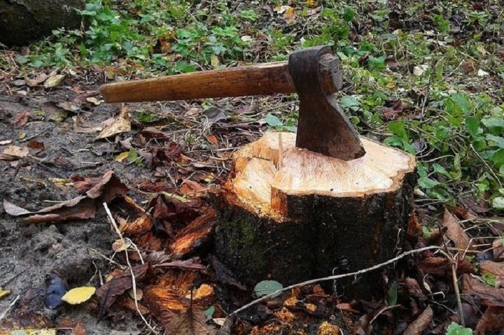 У Криворізькому районі поліцейські припинили незаконну вирубку лісу (фото)