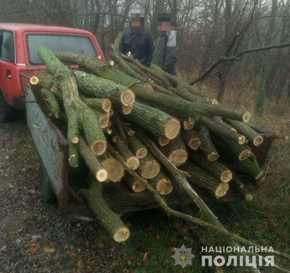 У Криничанському районі правоохоронці виявили незаконну вирубку лісу