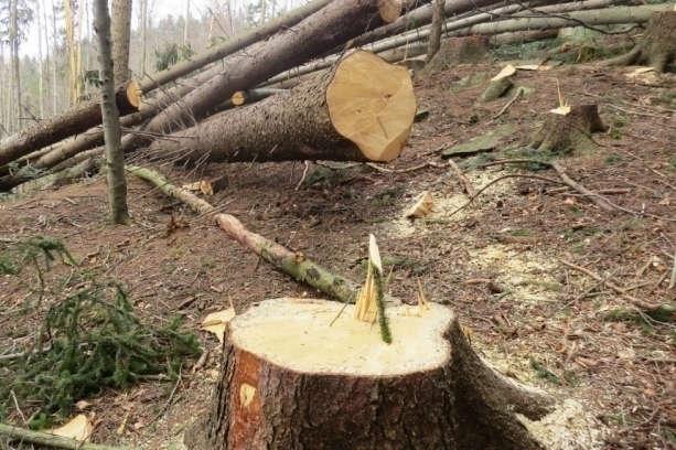 Незаконна порубка лісу: на Дніпропетровщині зупинили незаконне спилювання дерев