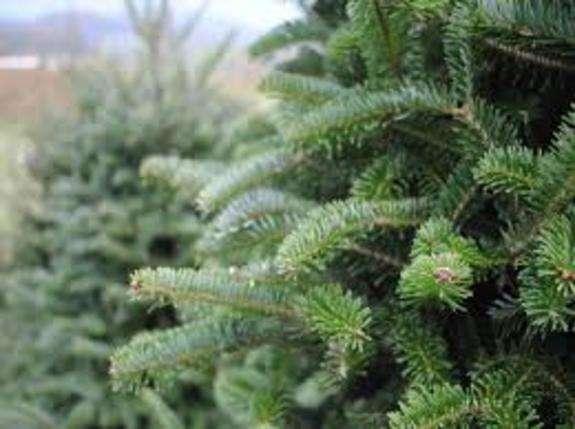 Ціни на ялинку в 2020: лісгоспи Дніпропетровщини підготувалися до новорічних свят