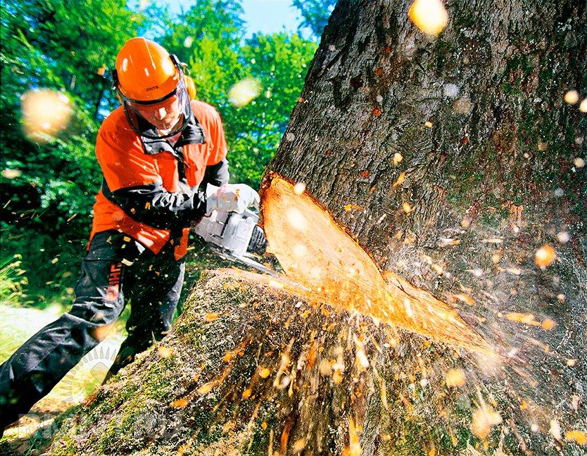 """В центрі Дніпра КП """"Міськзеленбуд"""" пошматував дерева"""