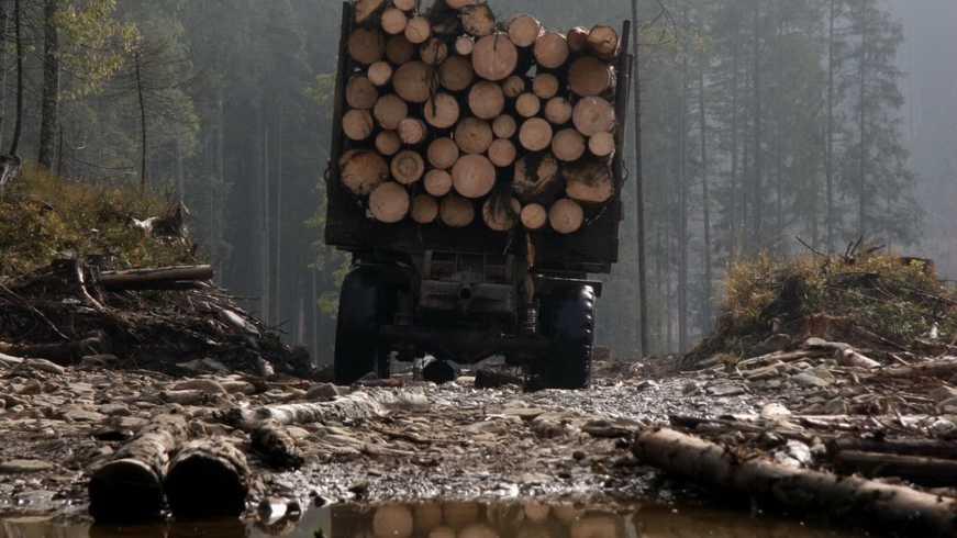 У Магдалинівському районі поліцейські виявили незаконну вирубку лісу