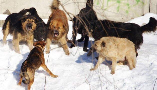 На Дніпропетровщині зграя собак тероризує дітей-інвалідів